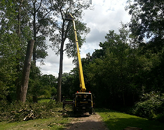 Tree Services Haslemere