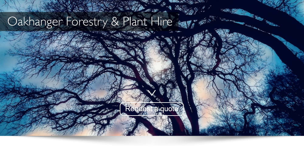 Tree Surgeons Farnham